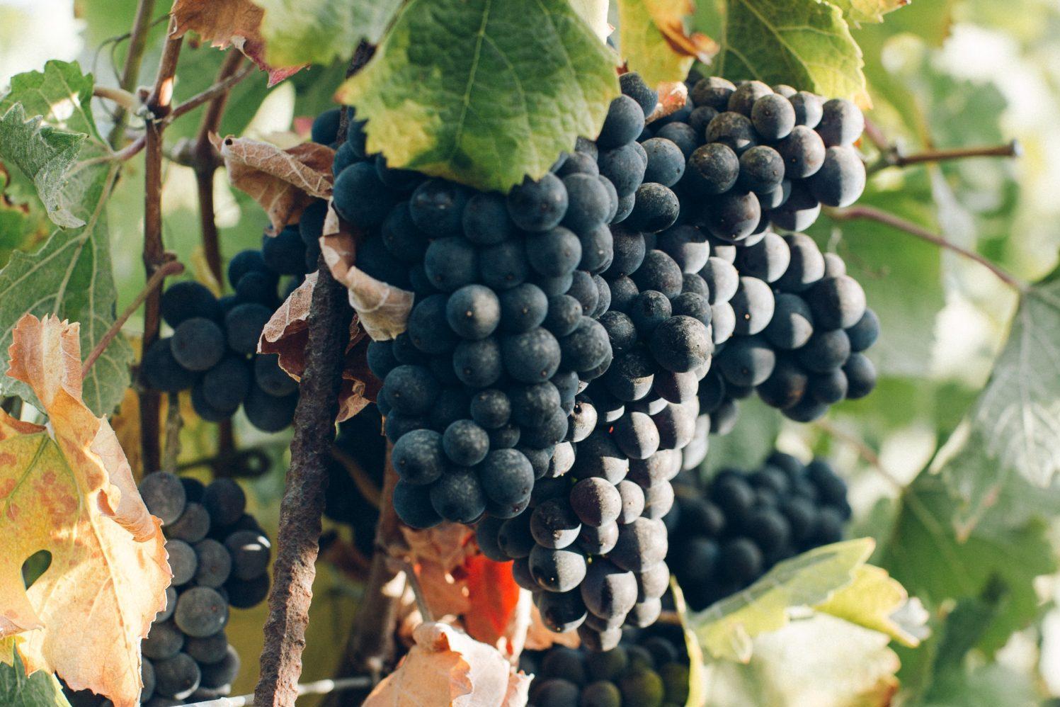 rode druiven verschil in smaak