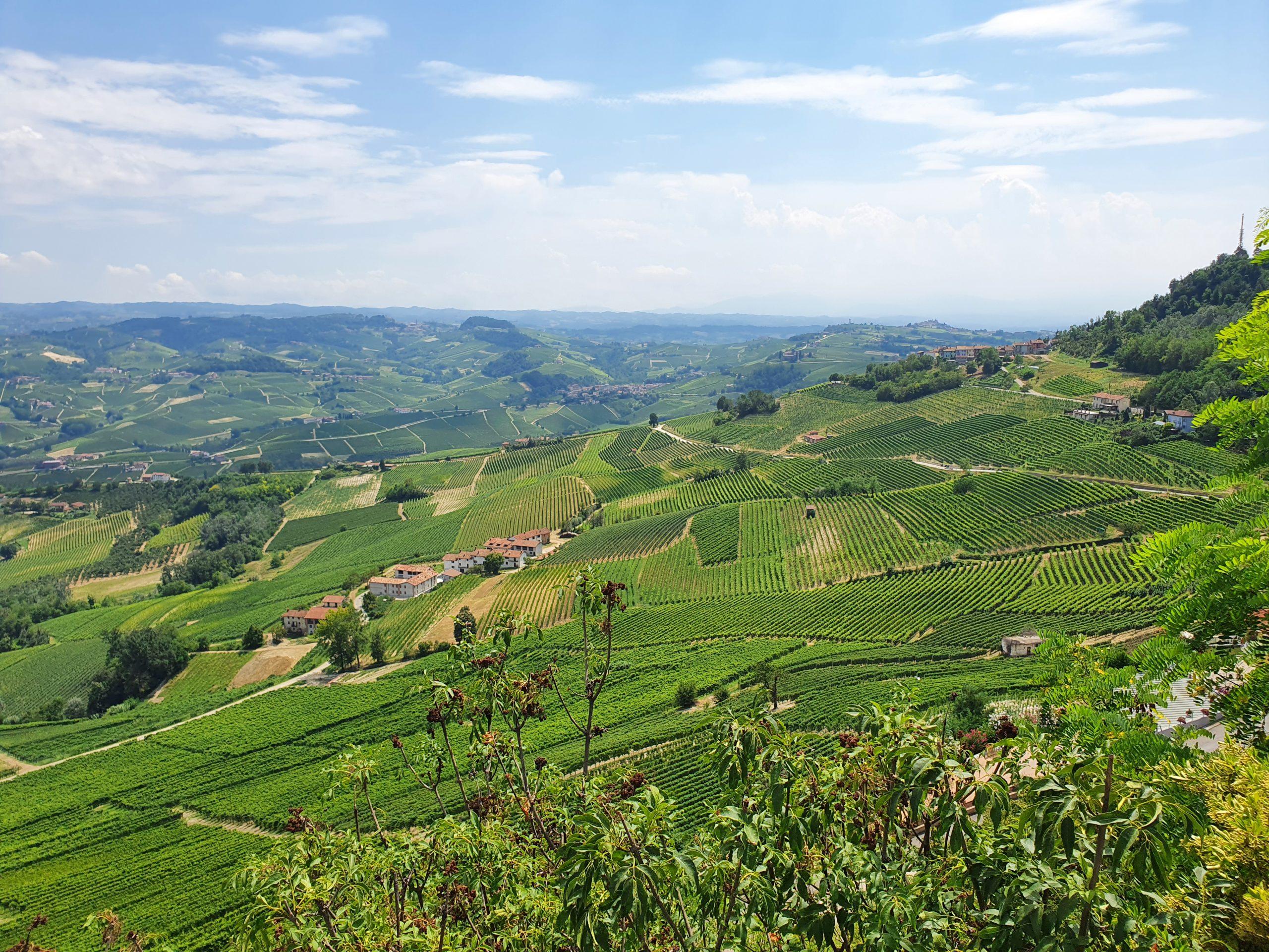 Druivensoorten die je alleen in Italië tegenkomt - La Morra - Piemonte