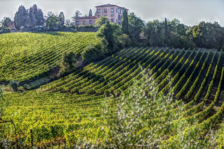 Bolgheri Super Tuscans