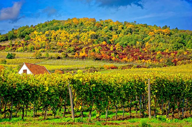 Tokaj wijnreis Hongarije